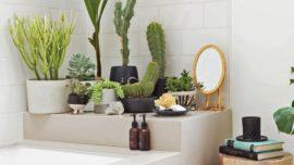 8 maneras de decorar con cactus
