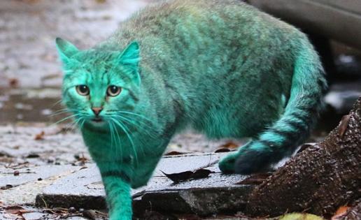 Misterio por un gato verde en Bulgaria