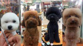 Perros con la cabeza cuadrada y redonda la última moda