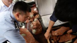 Descubren 43 huevos de dinosaurio en una obra en China