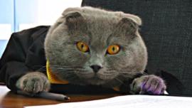 Un gato se convierte en director de una empresa en Rumania