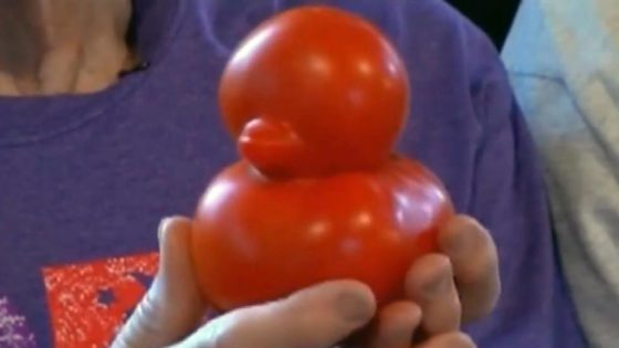 Un tomate con forma de pato sorprende a sus propietarios