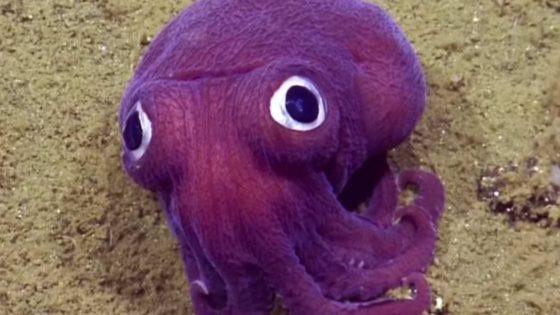Encuentran un calamar que parece un juguete