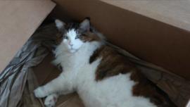 Este es el gato más grande de Nueva York