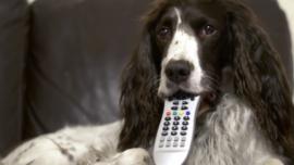 Inventan un mando a distancia para que los perros puedan ver la televisión