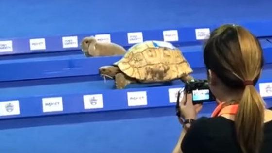 Una tortuga gana a un conejo en una carrera