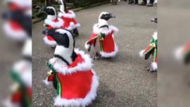 Pingüinos disfrazados de Santa Claus sorprenden a visitantes de un parque en Japón