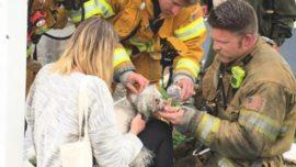Un bombero salva la vida a un perro practicándole el boca a boca