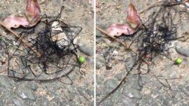 Encuentran una extraña criatura en Taiwán