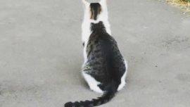¿Un gato bicolor o dos gatos? El nuevo reto viral