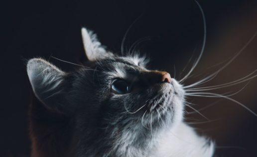 Una anciana deja una herencia de 30.000 euros a su gato