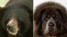 Una familia adopta y cría un oso pensando que se trataba de un perro