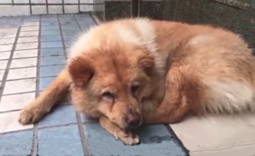 Un perro espera 12 horas cada día en el metro a que su dueño vuelva de trabajar