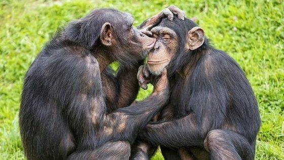 ¿Tienen emociones los animales?
