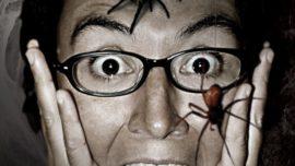 Cada año te tragas ocho arañas mientras duermes: el origen del bulo