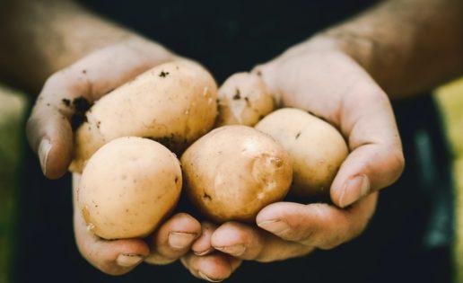 La forma de comer patatas que menos engorda