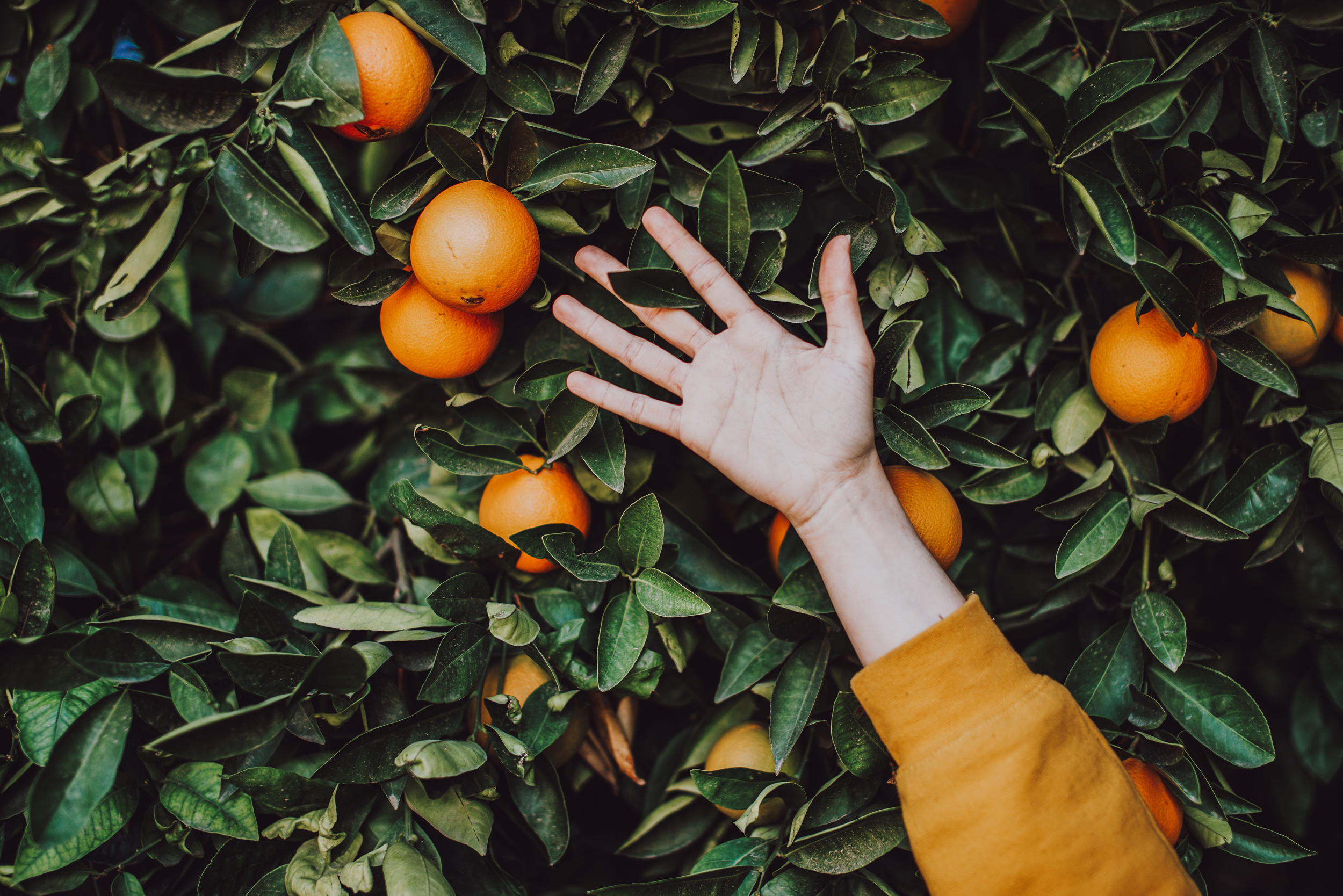 alimentos-anti-envejecimiento-naranja