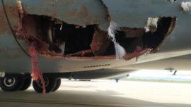 Un buitre impacta en pleno vuelo con un avión de transporte A400M del Ejército del Aire