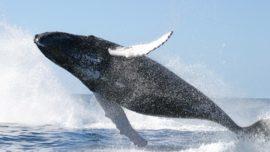 ¿Por qué los mamíferos son de tantos tamaños?