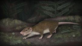 Descubren los restos del primer mamífero herbívoro
