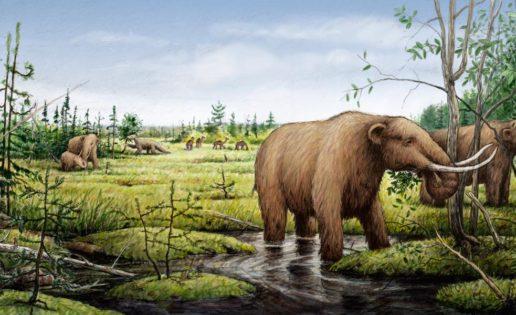 Un cometa acabó con los grandes mamíferos hace 13.000 años