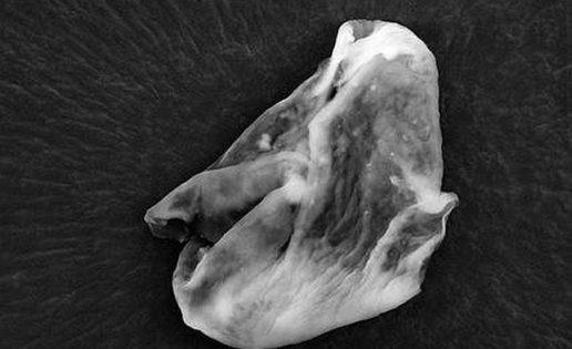 Científicos británicos creen haber encontrado vida extraterrestre en la atmósfera