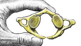 ¿Pudo la endogamia acabar con los neandertales?