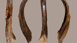 Estas herramientas de hace 90.000 años no las construyó nuestra especie