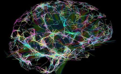 La ruta cerebral del lenguaje existe por lo menos desde hace 20 millones de años