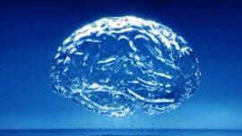 Cerebro hidratado, mente despierta
