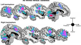 Al cerebro le gusta el vino bajo en alcohol