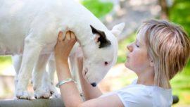 ¿Por qué sentimos cariño hacia nuestros perros? El secreto está en la mirada