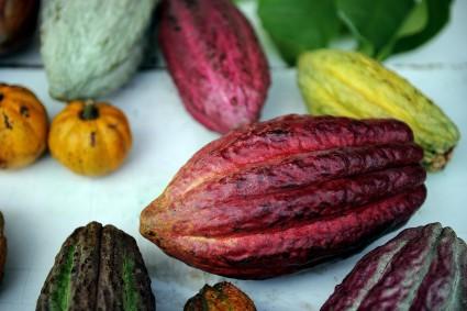 Cacao frente al deterioro cognitivo