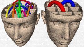 ¿Neuronas extra para el sexo en el cerebro masculino?