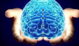 Diez descubrimientos sobre el cerebro en 2018