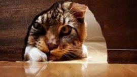 ¿Por qué la curiosidad mató al gato?