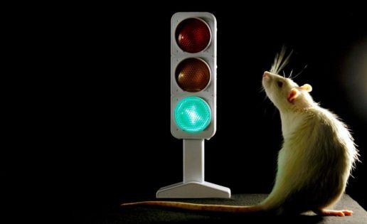 """El cerebro tiene un """"semáforo"""" que controla los impulsos"""