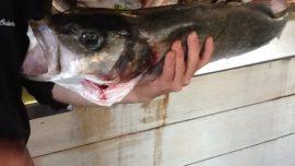 Diez asadores de pescado en el Norte