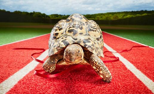 Bertie, la tortuga más veloz del mundo
