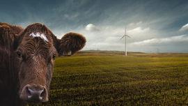 ¿Quieres saber cómo tu comida produce gases de efecto invernadero?